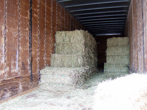 Hay at Summit